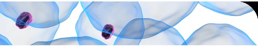 Molecular & cellular biology